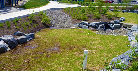 A Green City, Clean Waters rain garden along Stenton Avenue. Credit: Philadelphia Water