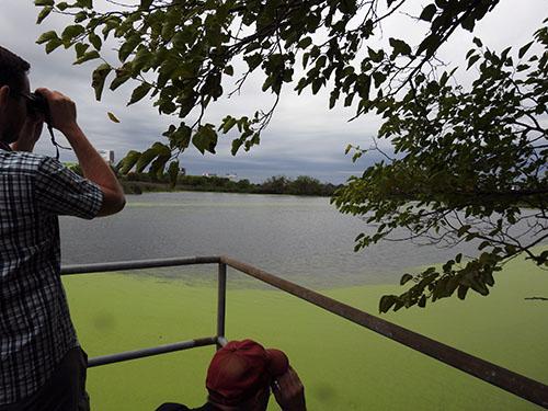 Sludge lagoons make for great bird habitat.