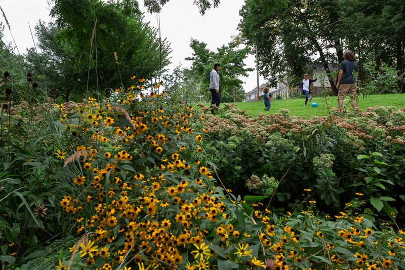 photo of a rain garden - black-eyed susan flowers fill the foreground, trees and rowhomes are visible in the background, and a family stands in a grassy area between kicking a ball around.